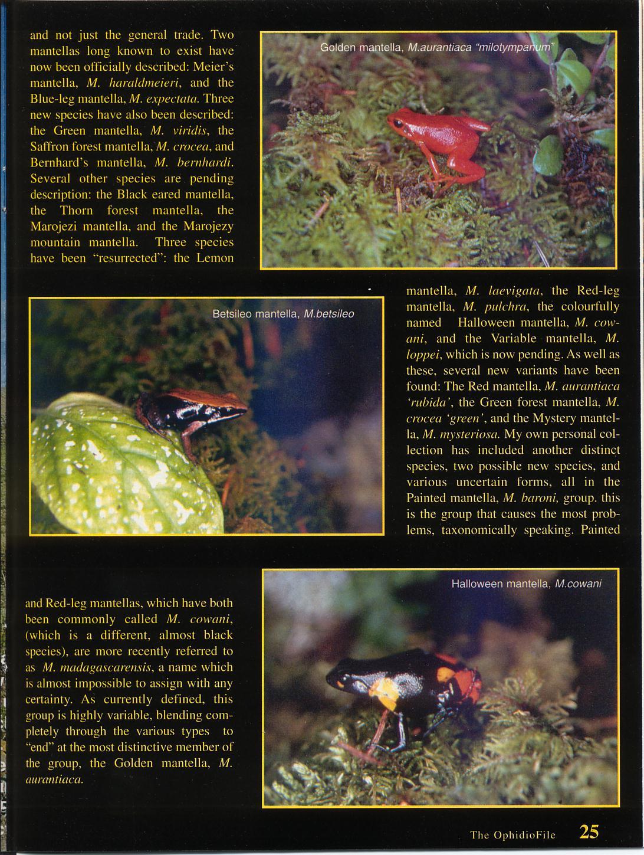 MantellaB Page 2