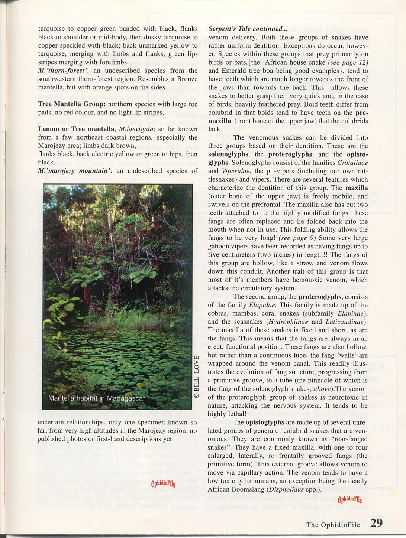 MantellaB Page 6